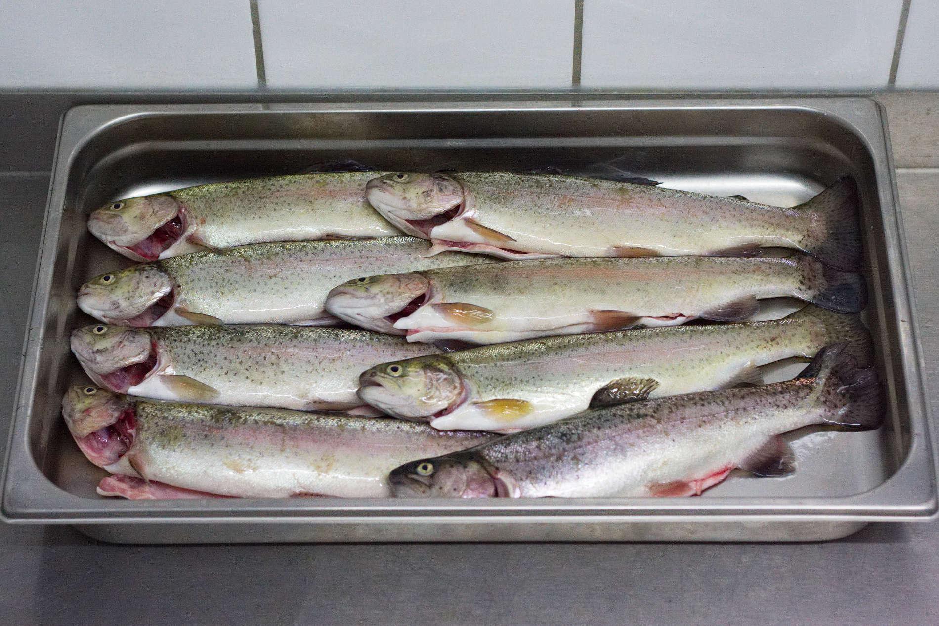 frischfisch-2